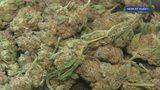 Mother wanted after daughter ingests marijuana