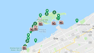 Algal blooms make water unsafe for dogs at Lake Erie beaches