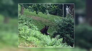 Officers, PA Game Commission tracking black bear in Bethel Park