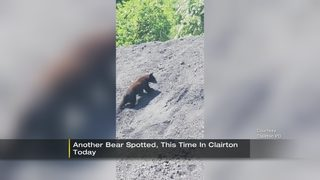 Bear spotted in Clairton
