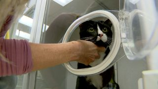 Cat survives tumble in washing machine