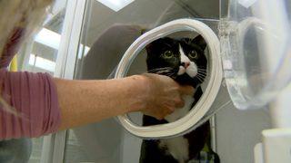Cat survives tumble in washing machine