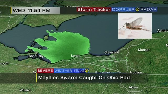 MAYFLY SWARM: Massive swarm of mayflies shows up on radar | WPXI