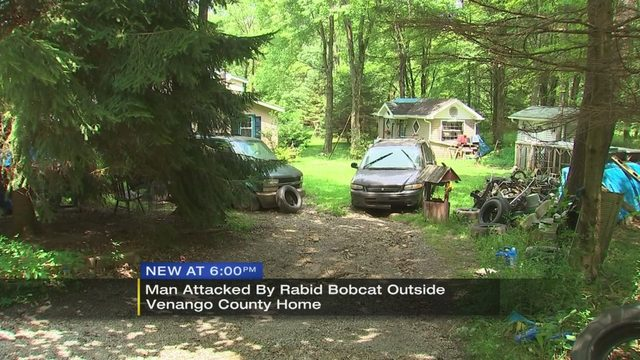 BOBCAT ATTACK: Rabid bobcat attacks local man at home | WPXI