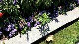 Marijuana plants found at Vermont Capitol