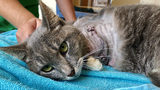 Animal rescue saves cat injured after firecrackers tied to front paw