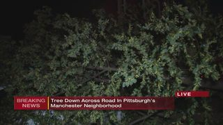 Tree down across road in Pittsburgh neighborhood