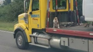 Dog leashed to back of tow truck