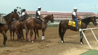 Horses die after head-on collision on track