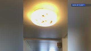Roach infestation has Westmoreland Co. Housing Authority scrambling
