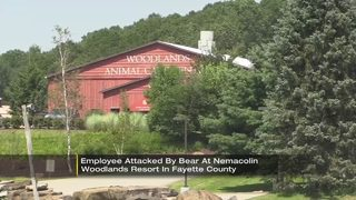 Zoo worker hurt in bear attack at Nemacolin