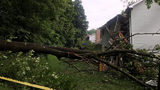 Man trapped in bed when tree falls onto his house; house now deemed unsafe