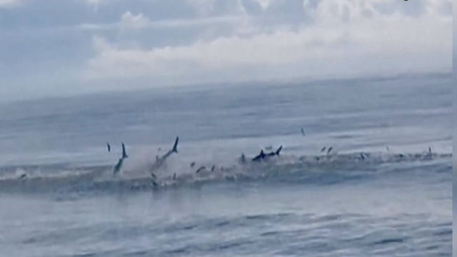 MYRTLE BEACH SHARKS: Sharks spotted off coast of Myrtle Beach | WPXI