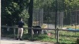 Child bitten by bear at Vancouver zoo