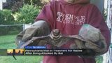 Pa. man in treatment for rabies after bat attack