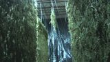 Overwhelming smell coming from hemp-drying warehouse frustrating residents