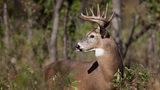 Opening day of deer season changing